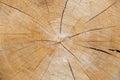 Parte del fondo natural de la madera de madera Fotos de archivo libres de regalías