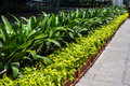 Parterre image plant in the road Royalty Free Stock Image