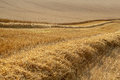 Partially harvested wheat field Stock Photos