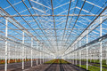 Partly empty greenhouse against a blue sky Royalty Free Stock Photo