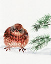 Partridge watercolor original painting of perdix on a snow asian style Royalty Free Stock Photos