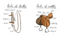 Parts of saddle and bridle