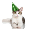 Party cat domestic with hat isolated on white Royalty Free Stock Images