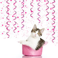 Party cat sitting in a cylinder Stock Photo