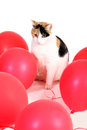 Party cat sitting between red balloons Stock Images
