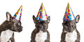 Party Dogs Stock Photography