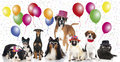 Party dogs some with different carnival hats Royalty Free Stock Image