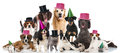 Party pets Royalty Free Stock Photo