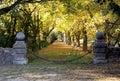 Passage enchaîné menant à l avenue des arbres de marron d inde Image libre de droits