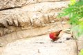 Passerine bird in aviary on a rock an butterfly world south florida Royalty Free Stock Photo