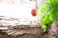 Passerine bird on rock in aviary a an butterfly world south florida Royalty Free Stock Images