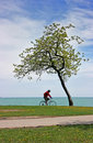 Passing bike by a lonely tree Stock Image