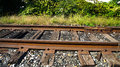 Passing the tracks photo taken on an unbeaten path next to a string of train cars composed with surrounding brush it becomes a Stock Images