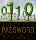 Password security technology concept as a group of trees shaped as computer digital binary code with a hidden secret access phrase Royalty Free Stock Images