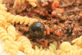 Pasta and ragu on a plate fusilli with cheese black olives Stock Images