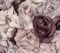 Pastel carpet of rose blossoms top view macro, symbolic figurative bed of roses love romance feelings romantic desire Royalty Free Stock Photo