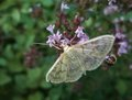 Pastel colored small butterfly filigree with spread wings while resting on some flowers Royalty Free Stock Images