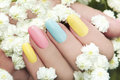 Pastel manicure on female hand with flower hipsofilas Stock Images