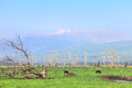 Pastoral view on amazing valley of national natural reserve hula valley park with snow covered mountain of hermon in the north of Royalty Free Stock Images