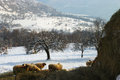 Pastoral winter landscape a beautiful view captured in balkan mountains bulgaria Stock Photography