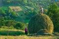 Pastorale Scene in the Romanian Countryside