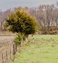 Pasture Fence LIne