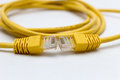 Patch cord network cable Royalty Free Stock Photography