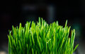 Patch of fresh green grass Stock Photos