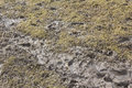 Patch of muddy grass a that has become sodden with the rain and turned into mud by people and animals walking over it Stock Image