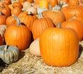 Patch pumpkin Стоковое Фото