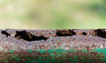 Patched oxidation rust iron pole green Stock Photo
