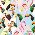 Patchwork tropical birds multicolor background