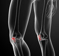 Patella Stock Images