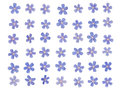 Patern of blue forget me tiny bright colors on a white background Royalty Free Stock Photography