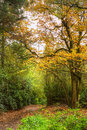 Path through Autumn Fall colorful forest Royalty Free Stock Photography