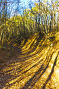Path in autumn forest beautiful landscape with golden Stock Image