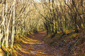 Path in autumn forest beautiful landscape with golden Stock Photography