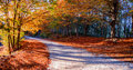 Path in autumn forest a colorful the Stock Image