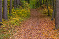 Path through autumn forest enchanted green yellow red Stock Image
