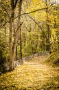 Path in autumn forest maple Royalty Free Stock Photography