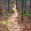 Path in autumn forest mountain Royalty Free Stock Image