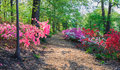 Path Through Azaleas Washingto...