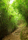 Path in bamboo forest Royalty Free Stock Image