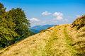 Path through beech forest on a grassy hillside Royalty Free Stock Photo
