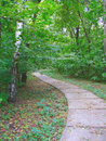Path in birch grove Stock Photo