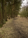 Path bordering forest at tandle hill in winter oldham england Royalty Free Stock Images