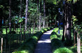 Path in boulevard nature with trees and grass Stock Images