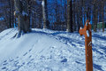 Path climbs uphill in winter forest
