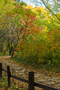 Path through the colorfull forest in autumn with a wooden fence colored colors belgrade serbia Stock Image