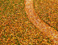 Path covered with autumn leaves lawn and a fallen yellow maple artistic background Royalty Free Stock Image